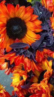 redish-orange-flowers